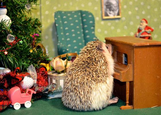 Super Adorable Hedgehog Photos that Make you Day