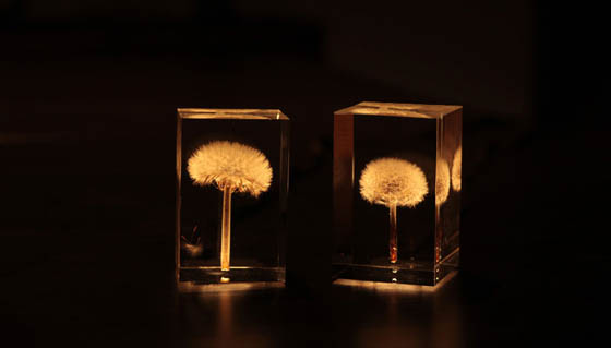 OLED Tampopo: Beautiful Dandelions Lights by Takao Inoue