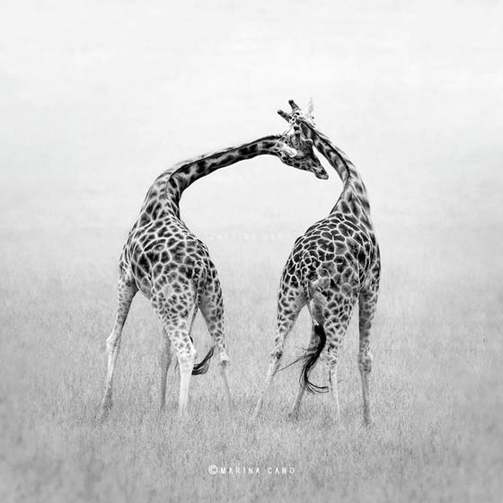 Stunning Wildlife Photography by Marina Cano