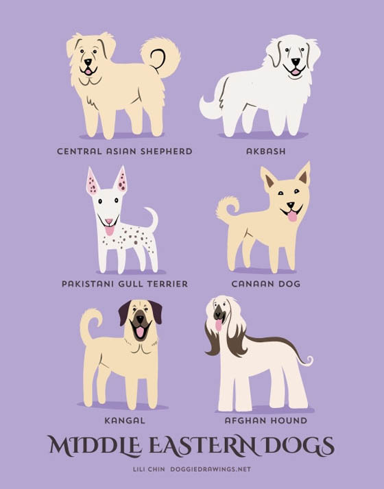 Dogs of The World: 192 Adorable Dog Breeds Illustration Grouped by Their Geographic Origins