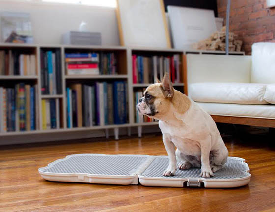 Shake Dog Potty: Stylish, Easy to Clean and Portable Dog Potty