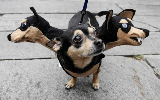 27 Creative and Funny Halloween Pet Costume Ideas