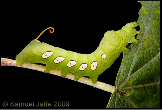 Surprisingly Before and After Photos of Caterpillar and Moth