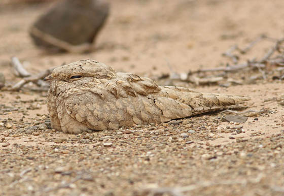 25 Amazing Photos of Animal Camouflage: Can You Spot Them?