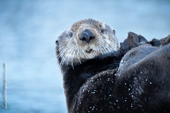 Photography of Cute and Funny Sea Otter with Humanized Expression