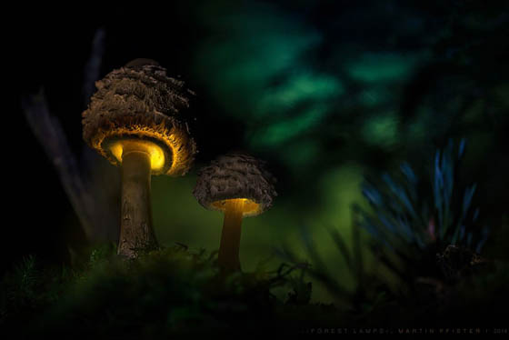 Fairy Tale like Photography of Glowing Mushroom by Martin Pfister