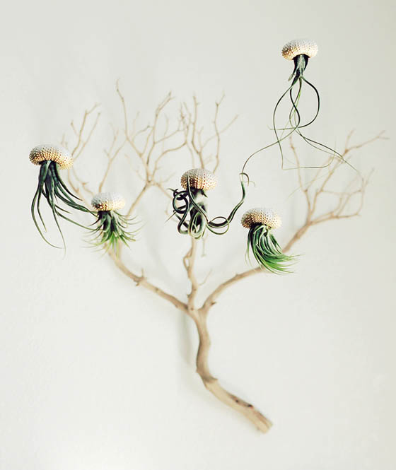 Unique Jellyfish Shaped Air Plant by 'PetitBeast'