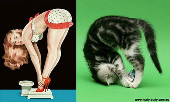 Hilarious Pictures of Cats Poses Like Pin-Up Girls