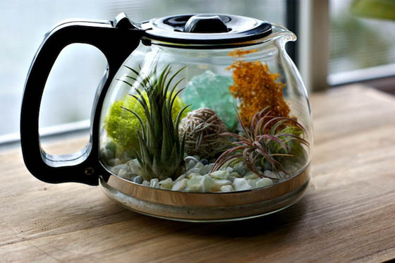 Plants and Coffee: Terrarium in Coffee Pot