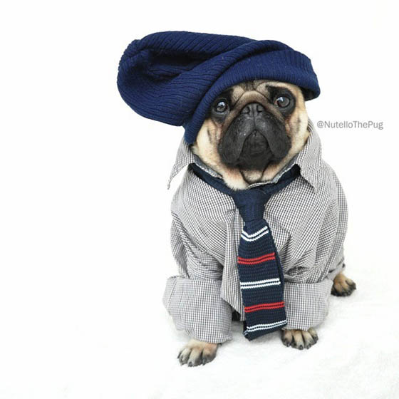 Nutello the Pug: One of the Most Fashionable Dogs on Instagram