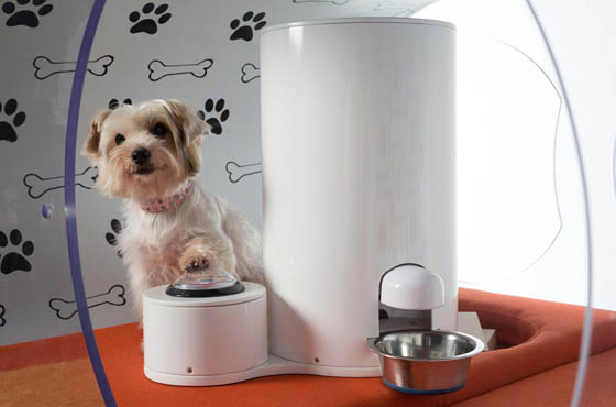 Samsung dream doghouse: the Most Suitable and Luxurious Doghouse