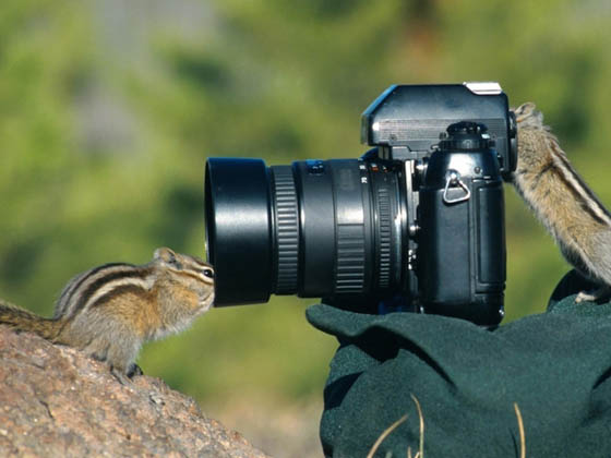 20 Funny Pictures of Animals Seem Like Take Photos
