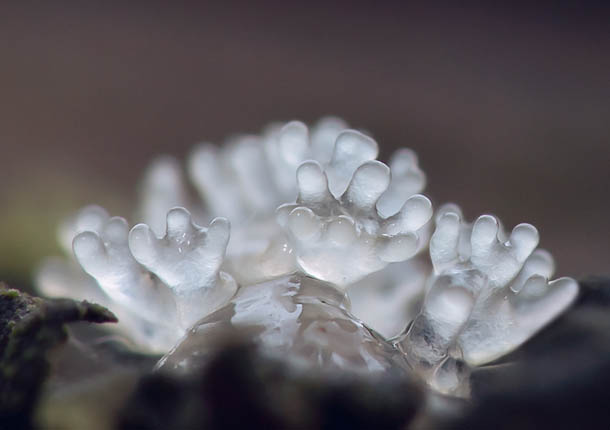 Alien Forest: Amazing Macro Photography of Slime Molds
