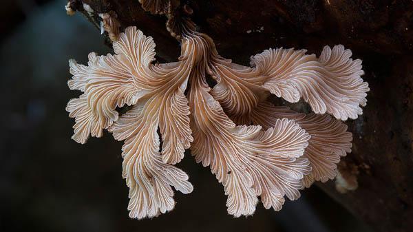 Magical World of Australian Fungi Photographed by Steve Axford