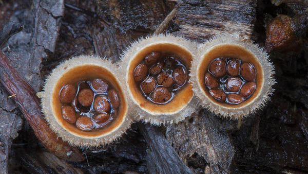Magical World of Australian Fungi Photographed by Steve Axford