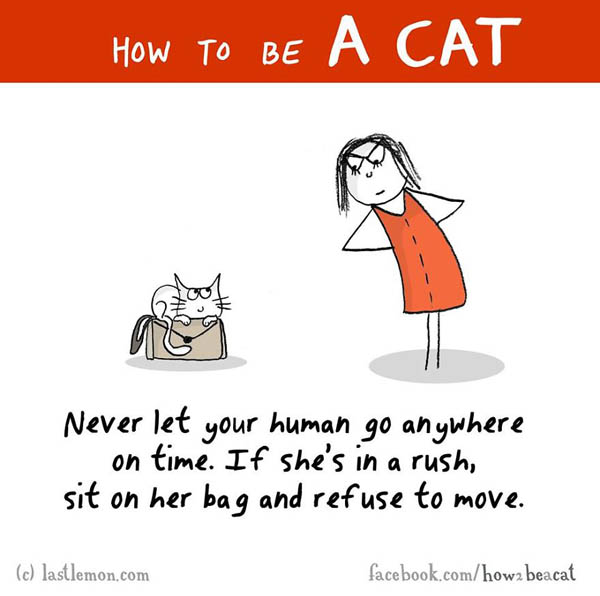 How To Be a Cat by Lisa Swerling and Ralph Lazar
