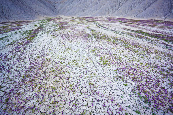Blossom in Utah Deserts by Guy Tal