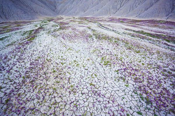 Blossom in Utah Deserts by Guy Tal