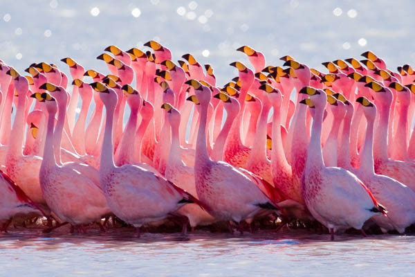 25 Amazing Pink-color Animals