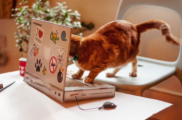 A Scratching Laptop Especially for Your Cat