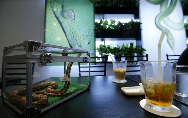 Coffee with Snake? Unusual Snake Cafe in Tokyo