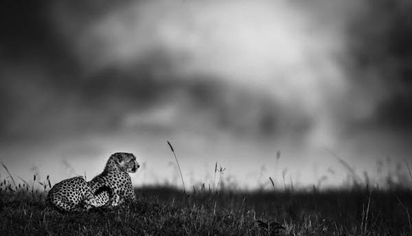 Stunning Black & White Photography of Africa's Animals