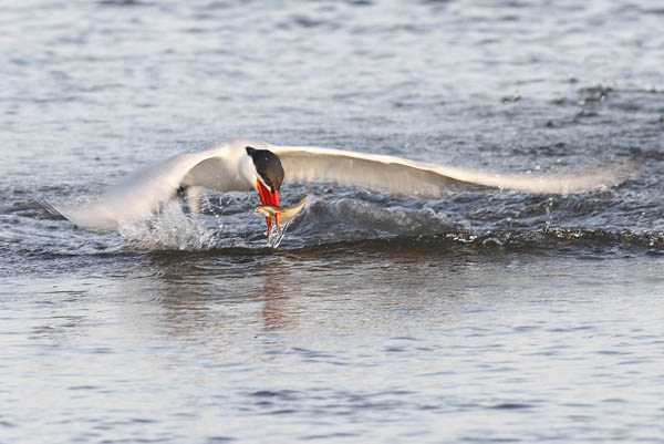 Stunning High Speed Photos of Birds Catching Fish