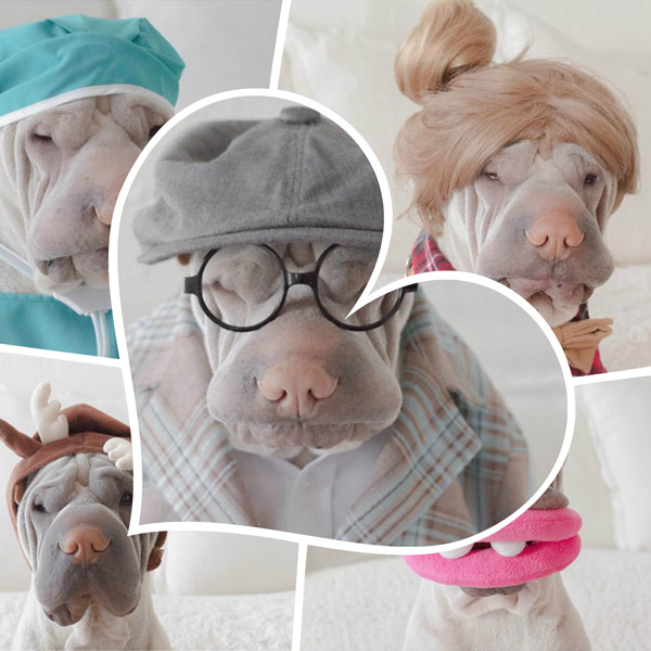Paddington: Adorable Shar Pei Wear Costumes with a Stoic Expression
