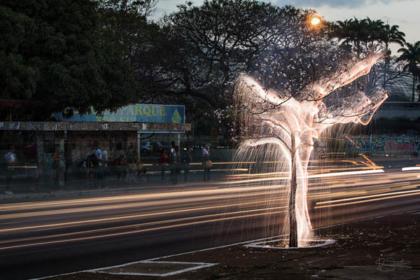 Tree of Life: Stunning Long Exposure Light Painted Trees by Vitor Schietti