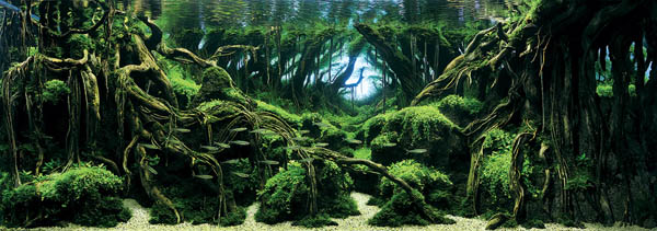 Most Stunning Aquarium Photos: Winners of the 2015 International Aquatic Plants Layout Contest