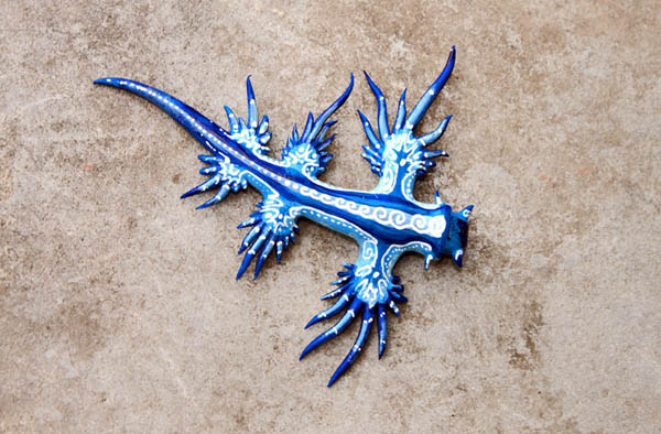 Blue Dragon: The Mythical-looking Creature is Another Type of Sea Slug