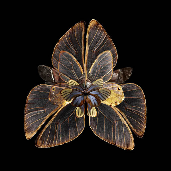 Insects Wings Photos are Manipulated to Look Like Blooming Flowers