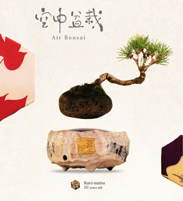 Air Bonsai: Grow and Nature Your Floating Little Star