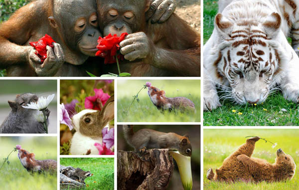 20 Adorable Photos of Animal Smell Flowers