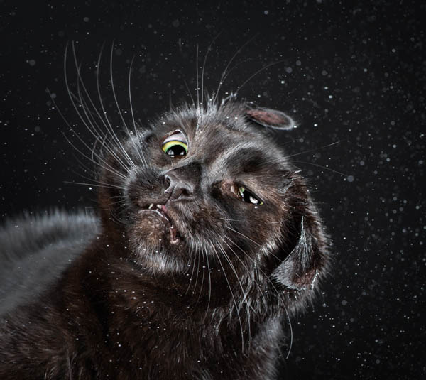 Hilarious Portraits of Felines Shaking in Motion Photographed by Carli Davidson