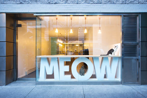 Meow Parlour: Cafe with Freely Roaming Cats in New York