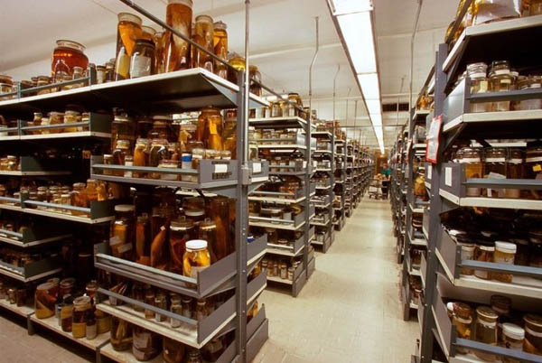 Behind-the-Scenes of the Smithsonian's National Museum's Warehouse of Natural History