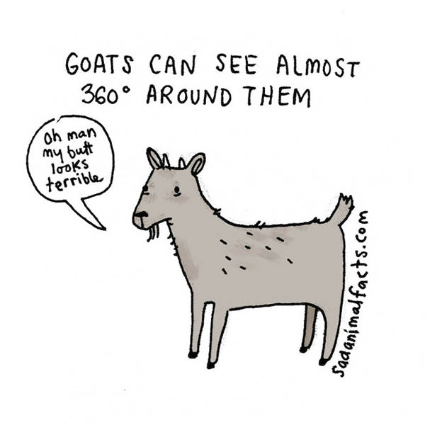 Sad Animal Facts: Cute Illustrations with Sobering Facts