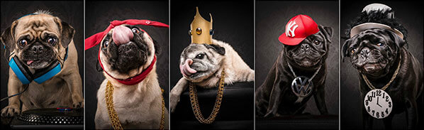 Pug Dressed in 80s and 90s Hip Hop Outfits