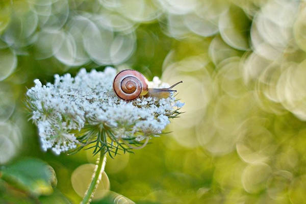 The Tiny World of Snails by Katarzyna Załużna