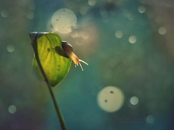 The Tiny World of Snails by Katarzyna Załużna