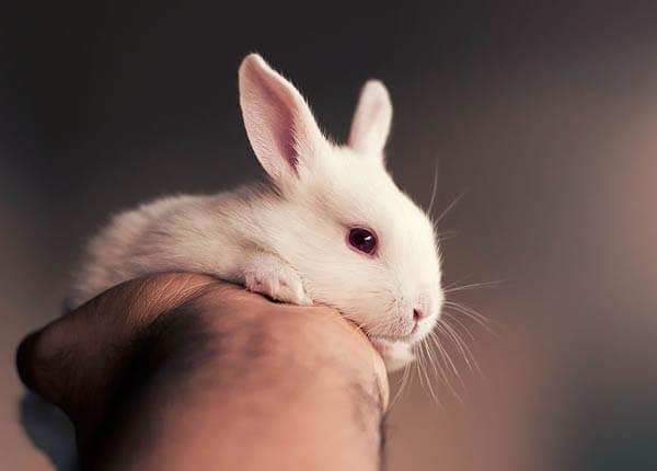 Adorable Photos of Newborn Baby Bunny
