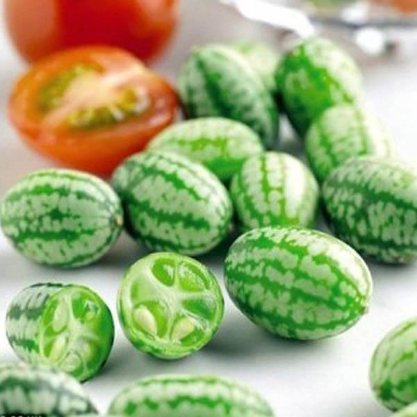 Cucamelon: a Grape Size Watermelon Looking Cucumber
