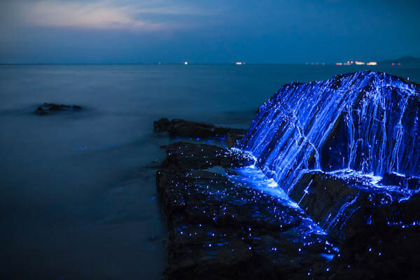 The Weeping Stones: A Stunning Photo Series of Sea Fireflies by Tdub Photo