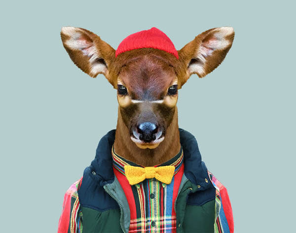 Cute Images of Animal Babies Photoshoped on Well Dressed Human Body