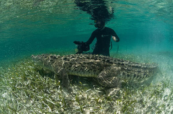 Life Risking Photography of Ten-Foot-Long American Crocodile
