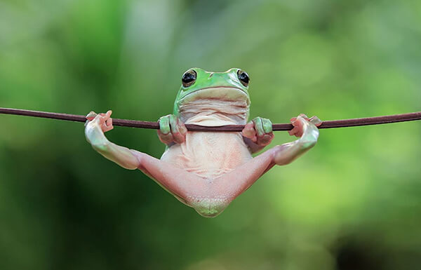 Most Photoshoped-like Real Photos of Frogs by Tanto Yensen