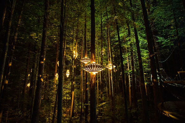 Sculptural Lights Have Been Added to Redwoods TreeWalk in New Zealand