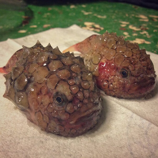 Photos of Alien-Like Fish Caught by Russian Deep Sea Fisherman