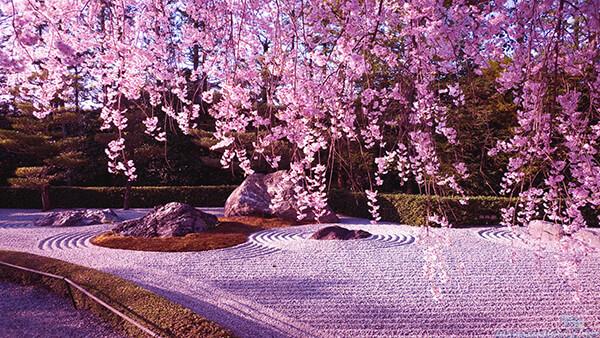 10 Breathtaking Cherry Blossom Photos Taken at Night